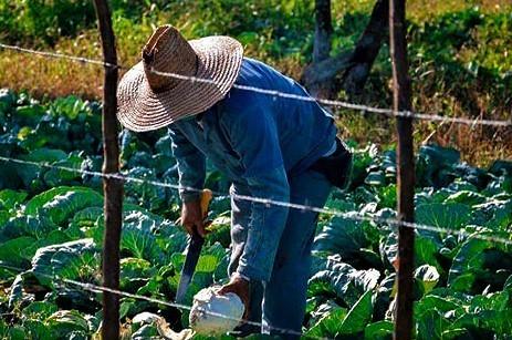 Agricoltore dell'Avana